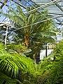 Neuer Botanischer Garten - Farnhaus 001.jpg