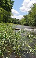 New River Trail (27764446242).jpg