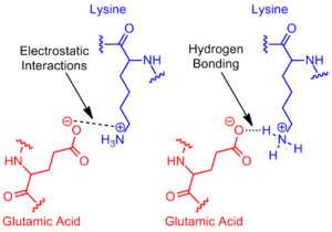 Salt bridge (protein and supramolecular) - Wikipedia