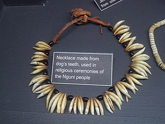 Nguni people - Necklace made from dog's teeth, used in religious ceremonies of the Nguni people. Museum of Gems and Jewellery, Cape Town