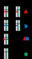 Nhóm máu ABO (ABO blood type).png