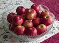 Niğde elması - Apple Niğde 06.jpg