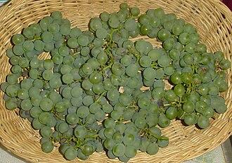 Niagara (grape) - Niagara grapes