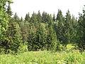 Niva Horského potoka (014).jpg