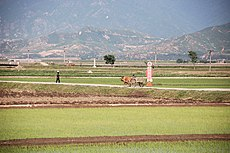 North Korea-Anbyon County-Chonsam Cooperative Farm-01.jpg