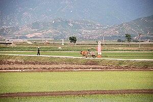 Anbyon County - Chŏnsam Cooperative Farm, Anbyŏn