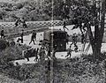 North Korean Axe Murderers at DMZ - 1976.jpg