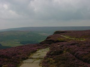 300px-North_York_Moor_nat_park_near_Chop_gate.JPG