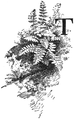 OFH-051 Woodsia & initial T.png