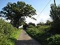 Oak tree by a country lane - geograph.org.uk - 991373.jpg