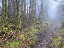 Old-black-appalachian-trail-tnnc1.jpg
