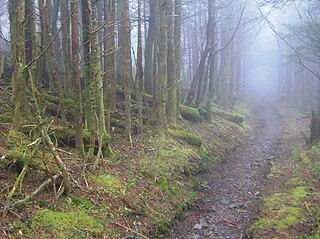 Appalachian temperate rainforest