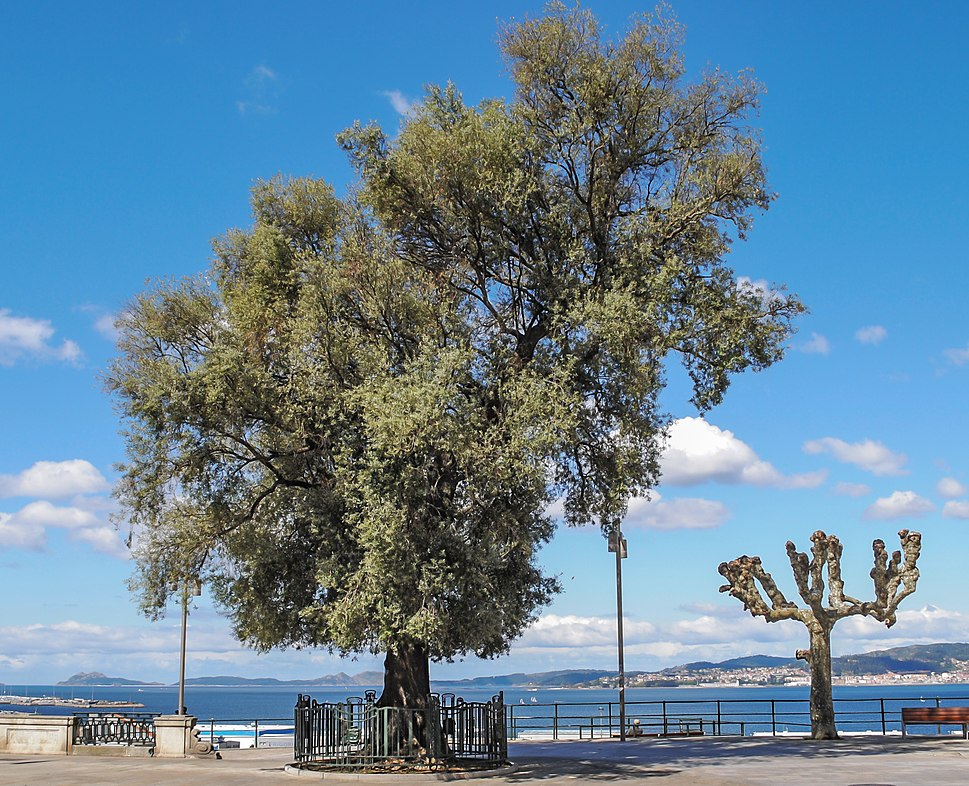 Oliveira Vigo Paseo de Alfonso XII-retouched-4