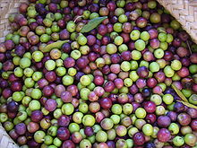 Olives arbequines006.JPG
