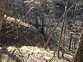 On Broken Toe, Overlooking the Brook - panoramio.jpg
