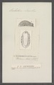 Onchidoris leachii - - Print - Iconographia Zoologica - Special Collections University of Amsterdam - UBAINV0274 080 21 0033.tif
