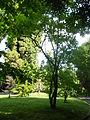 Orto botanico di Napoli 223.JPG