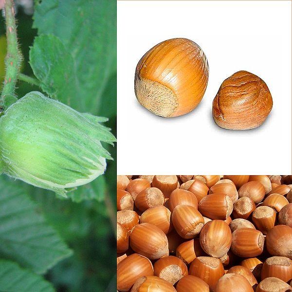 File:Owoce Orzech laskowy.jpg