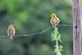 Pássaros ao pé da Serra.jpg