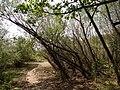 Přírodní park Škvorecká obora-Králičina - lesy východně od sídliště Rohožník a severně od Květnické studánky (10).JPG