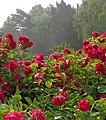 Palanga Botanical Park in Mist. 2018(6).jpg
