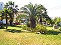 Pallini 630 85, Greece - panoramio (5).jpg