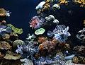 Palma Aquarium-Mares tropicales.jpg