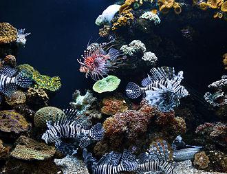 "Palma Aquarium - One of the ""Tropical Sea"" tanks"
