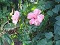 Papo Relleno Color Peach.jpg