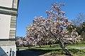 Parc Moynier-magnolia.jpg