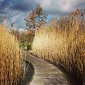 Parc du Chemin-de-l'Ile 7. CC by Ariel Kogan.jpg