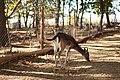 """Parcul de Animale - """"Moara de Vant"""" (8110132568).jpg"""