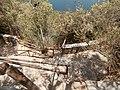 Parko Agios Nikolaos 6073173.JPG