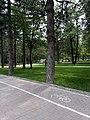 Parku Rinia Korçë.jpg