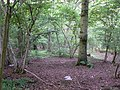 Patch of woodland - geograph.org.uk - 821255.jpg