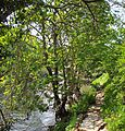 Path by the River Aire, near Esholt (2489846655).jpg