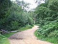 Path in Epping Forest - geograph.org.uk - 2523484.jpg