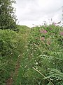 Pathway to Knowle Hill - geograph.org.uk - 212777.jpg