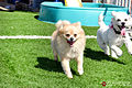 Pawliday Inn Pet Resort 23.JPG