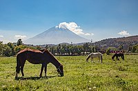 Peaceful scenery with volcano Misti in the background - Peru.jpg