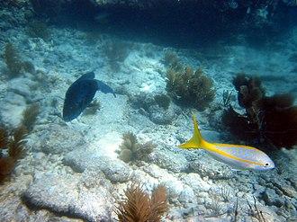John Pennekamp Coral Reef State Park - Image: Pennekamp Fish 1