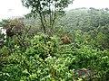 Perumedu - panoramio (3).jpg