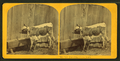 Pet of the farm yard, by Kilburn Brothers.png
