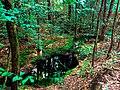 Photo-OutdoorImage-Adobe-Spring-in-Forest.jpg