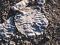 Piedra en las salinas de Bujaraloz (10759761635).jpg
