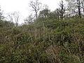 Pierce Wood Camp (West), Piercefield, St Arvans.jpg