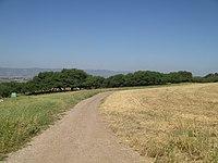 PikiWiki Israel 35116 Acacia albida nature reserve in Tel Shimron.JPG