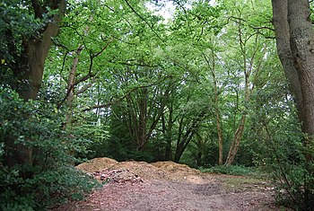 English: Piles of wood chippings, Brokes Wood