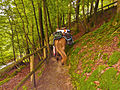 Pilgerweg im Eifgenbachtal-28.07.12.JPG