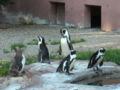 Pinguine-in-Nuernberg.jpg